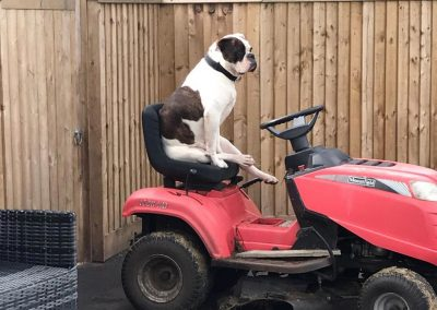 Dog-on-Lawnmover