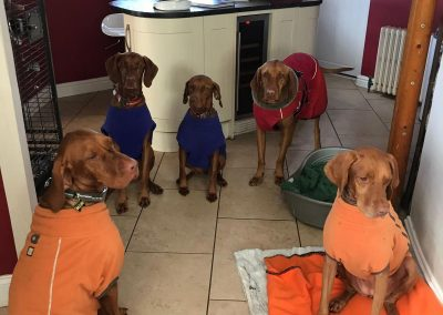 The-vizler-gang